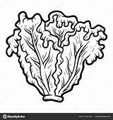 Lettuce Coloring Frutas Colorear Dibujos Vector Verduras Alface Colorir Pintar Imagen Imagenes Sobre Cucumber Vegetable Depositphotos sketch template