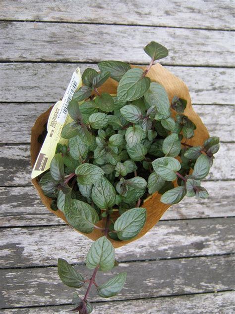 Pflanzen Für Einen Sonnigen Balkon › Kunterbuntes-allerlei