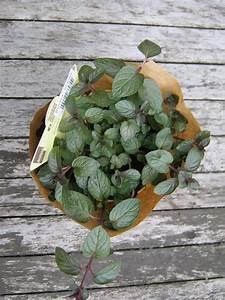 Blumen Für Sonnigen Standort : pflanzen f r einen sonnigen balkon kunterbuntes allerlei ~ Michelbontemps.com Haus und Dekorationen