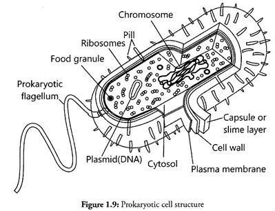 bacterial cell sheet coloring pages