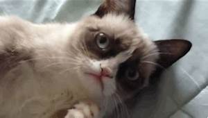 Smiling Cat GIFs - Find & Share on GIPHY
