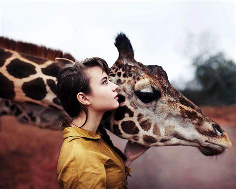 stunningly majestic photography  giraffes wave avenue