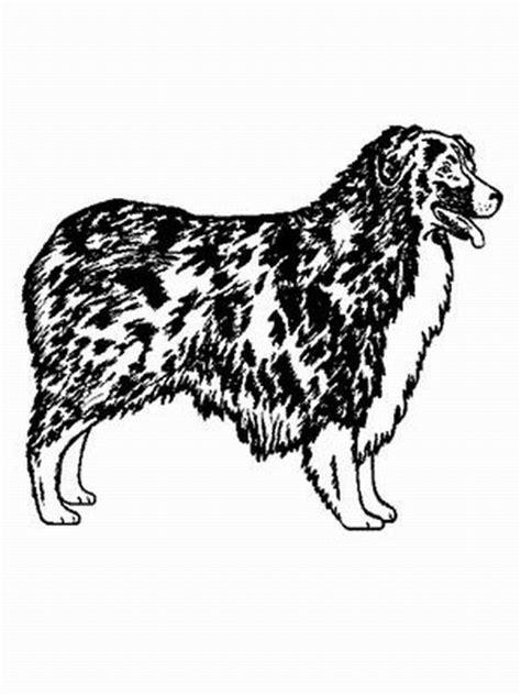 hund australian shepherd ausmalbild malvorlage hund