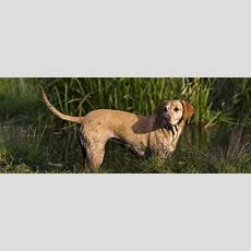 So Wird Der Hund Fit Für Die Jagd » Tierheilkunde