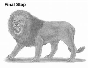 How To Draw A Lion Roaring | www.imgkid.com - The Image ...