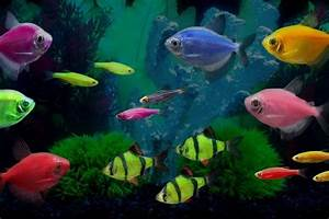 17 Best images about fish on Pinterest | Glow, Betta fish ...