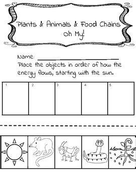 Food Chain Worksheet By Brown's Bunch Of Brilliance Tpt