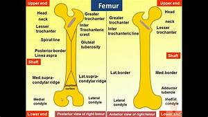 Magdy Said Anatomy Series Lower Limb  Anatomical Features