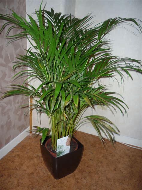 bien plante verte d interieur facile d entretien 7 comment soigner mon yucca la r233ponse est
