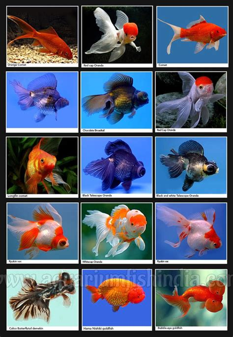 marine aquarium fish identification fish aquarium