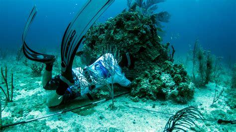 spearfishing fishing charters west key charter
