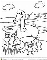Pond Duck Drawing Coloring Getdrawings Draw sketch template