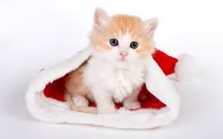 cat with santa hat the ipkat friday fantasies