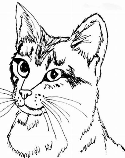 Coloring Cat Head Kitty Pages Adult Sheets