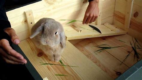 coniglio nano prezzo conigli nani come scegliere un - Gabbia Coniglio Nano Prezzo