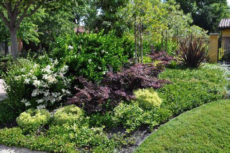 shrubs for borders cool shrub border