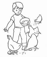 Coloring Chores Chickens Feeding Farm Boy Animals Printable Feed Dando Work Activity Colorear Dibujo Comer Gallinas Doing Colouring Sheet Chicken sketch template