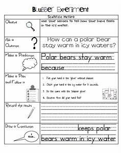 Sarah's First Grade Snippets Polar Bear blubber experiment