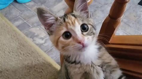 Funny Kitty Cat! Youtube