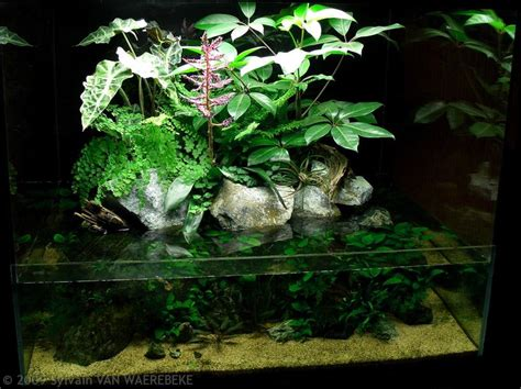 Aga Aquascape by Aga Aquascaping Contest Delivers Stunning Freshwater Views