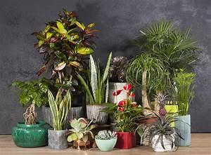 Plantes Grasses Intérieur : plantes d 39 int rieur schilliger ~ Melissatoandfro.com Idées de Décoration