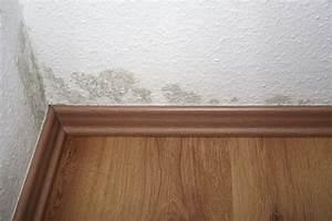 Weißer Schimmel An Der Wand : len ens tipp schimmel wegen falscher farbe advopedia ~ Michelbontemps.com Haus und Dekorationen