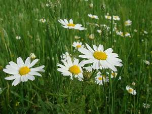 Wallpapers: Spring Flowers Background