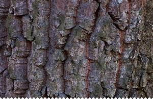Tuer Un Arbre Avec De L Acide : adrom de en arbre planter bouturer entretenir jaime ~ Dailycaller-alerts.com Idées de Décoration