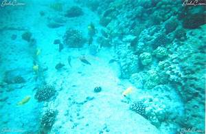 saltwater fish cheap - when it comes to keeping corals and ...