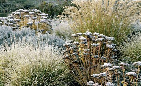 Garten Herbst Zurückschneiden by Stauden Und Ziergr 228 Ser Als Winterschmuck