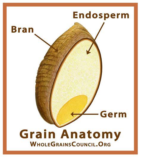 Corn Seed Parts Diagram