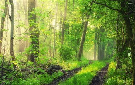 Green Forest Photo Hd by Grass Green Forest Plants Path Wallpapers Grass Green
