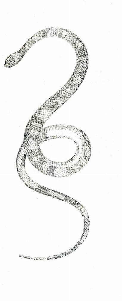 Snake Eyed Outlook