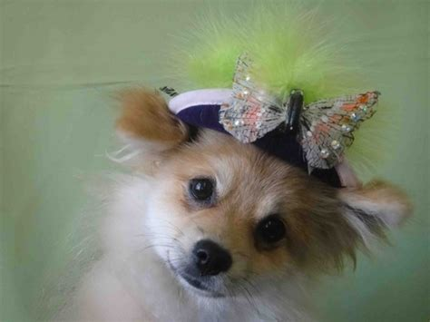 Wedding Accessories For Dogs : Dapper Wedding Accessories For Your Dog 1