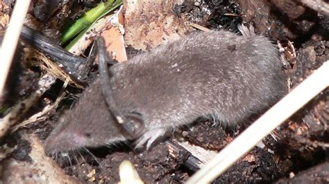 Controlling Pests In Compost How To Keep Animals Out Of
