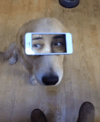 gifs for iphone golden retriever phone gif find on giphy