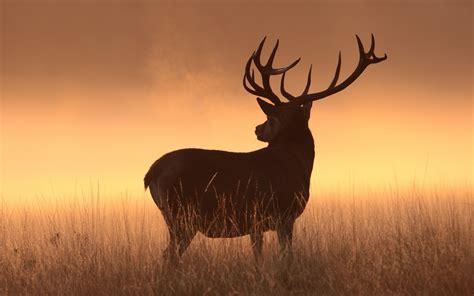 wallpaper deer silhouette hd animals  wallpaper