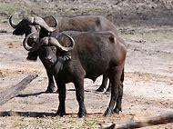 All Wild Animals in Africa