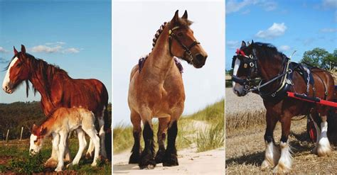 draft horse breeds horses homestead help morningchores farm names different types every work