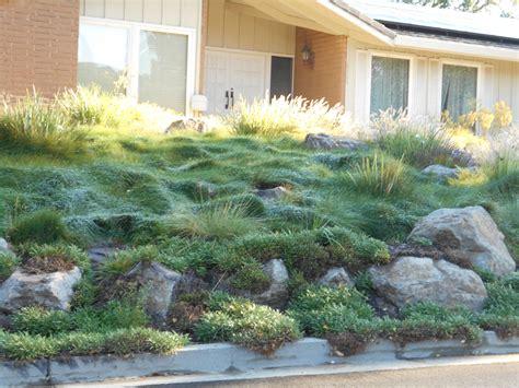 landscaping ideas san francisco bay area native plants