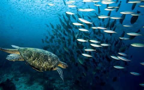 Fish Ocean Sea Turtle