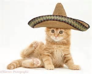 hats for cats feline fashion warehouse sombrero for cat