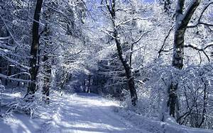 Roads winter snow trees forest woods nature landscapes ...