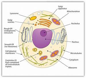 Protozoa Cell Diagram