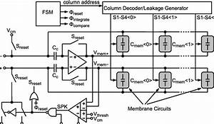 Neuron Circuit  A Detailed Diagram Of The Membrane Circuit