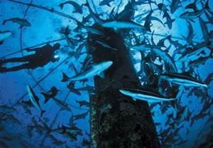 Open Blue Cobia Fish