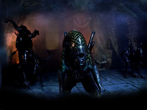 avp wallpaper avpgalaxys gallery