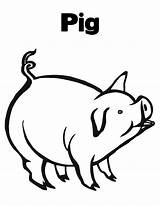 Pig Coloring Pages Peppa Printable Pigs Piggy sketch template