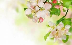 Fresh and elegant trap flower: Apple spent desktop ...
