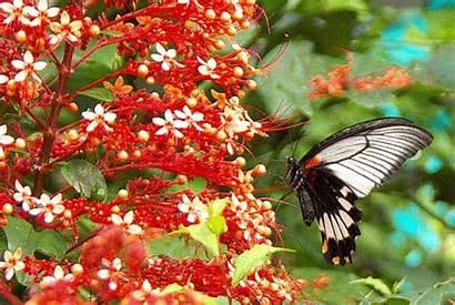 Butterfly Ageha Nagasaki Mormon Aka Orange